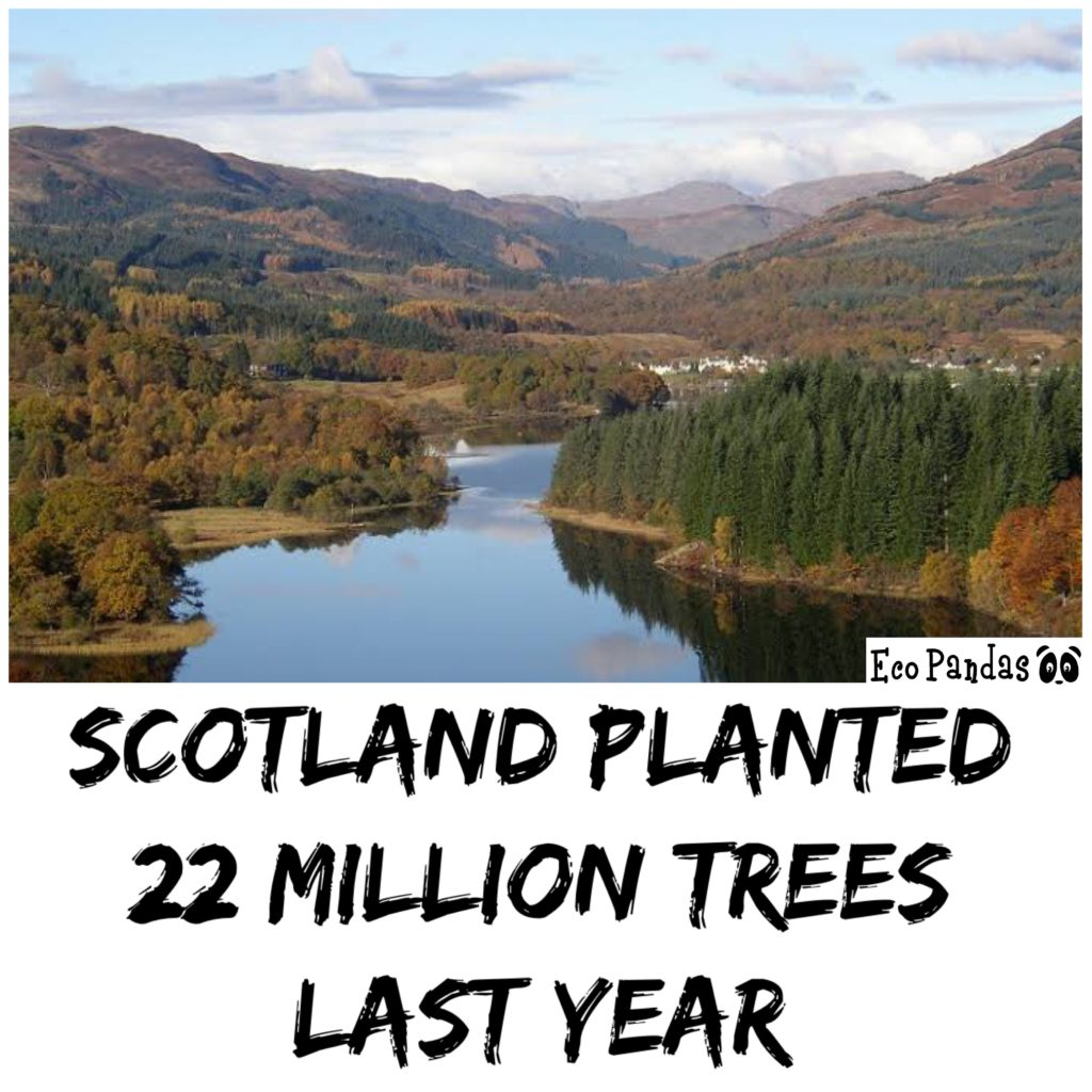 896403276282 Scotland Planted 22 Million Trees Last Year | Eco Pandas